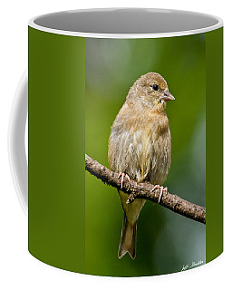 Juvenile American Goldfinch Coffee Mug