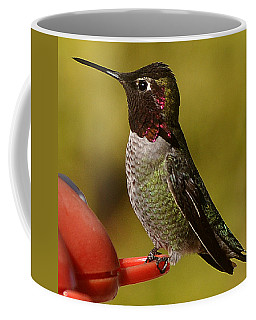 Coffee Mug featuring the photograph Juvenile Male Anna by Jay Milo