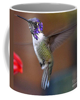 Coffee Mug featuring the photograph Juvenile Male Costa by Jay Milo