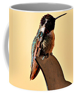 Coffee Mug featuring the photograph Juvenile Rufus Hummingbird Sitting It Out by Jay Milo