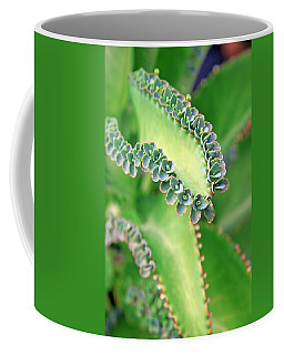 Kalanchoe Coffee Mug