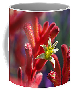 Coffee Mug featuring the photograph Kangaroo Star by Evelyn Tambour