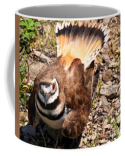 Killdeer On Its Nest Coffee Mug by Chris Flees