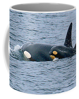 Coffee Mug featuring the photograph Killer Whale Mother And New Born Calf Orcas In Monterey Bay 2013 by California Views Mr Pat Hathaway Archives
