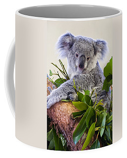 Koala On Top Of A Tree Coffee Mug