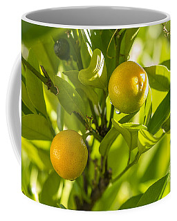 Kumquats Coffee Mug