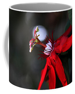 Coffee Mug featuring the photograph Lady Margaret - Passionflower  by Ramabhadran Thirupattur