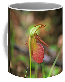 Lady Slippers At Moore State Park 4 Coffee Mug