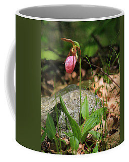 Lady Slippers At Moore State Park 3 Coffee Mug