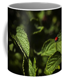 Coffee Mug featuring the photograph Ladybug by Bradley R Youngberg