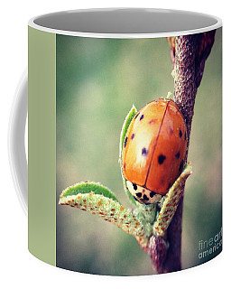 Coffee Mug featuring the photograph Ladybug  by Kerri Farley