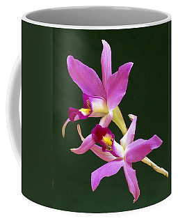 Laelia Anceps Coffee Mug
