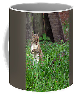 Coffee Mug featuring the photograph Lake Howard Squirrel 000 by Chris Mercer