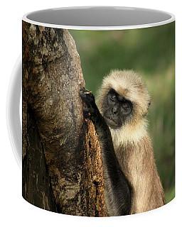 Coffee Mug featuring the photograph Langur - Hanuman Langur by Ramabhadran Thirupattur