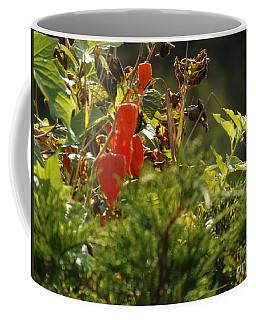 Coffee Mug featuring the photograph Lantern Plant by Brenda Brown