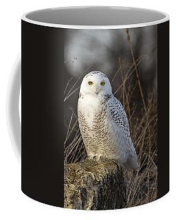 Late Season Snowy Owl Coffee Mug