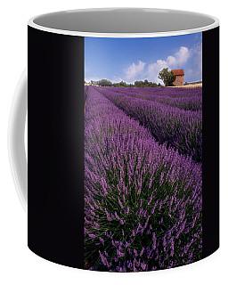 Lavender In Provence Coffee Mug