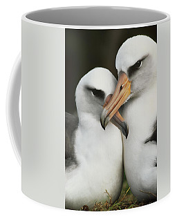 Laysan Albatrosses Courting, Hawaii Coffee Mug