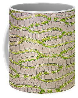 Leaf Tissue Of Sphagnum Moss, Lm Coffee Mug