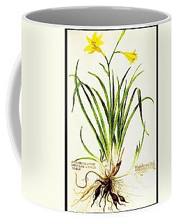 Coffee Mug featuring the drawing Lemon Daylily Botanical by Rose Santuci-Sofranko