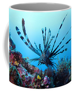 Coffee Mug featuring the photograph Leon Fish by Sergey Lukashin