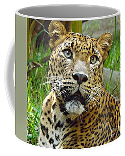 Leopard Face Coffee Mug by Clare Bevan