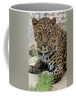 Leopard Lounging 1 Coffee Mug