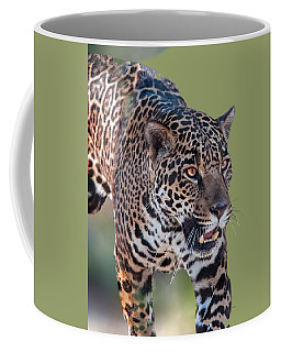 Jaguar Walking Portrait Coffee Mug