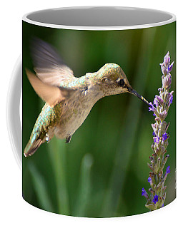 Light Filters Behind The Hummer Coffee Mug
