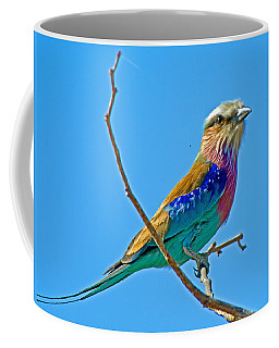 Lilac-breasted Roller In Kruger National Park-south Africa Coffee Mug