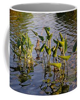Lillies In Evening Glory Coffee Mug
