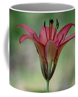 Lillium Philadelphicum Coffee Mug