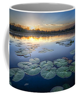 Lily Pads In The Glades Coffee Mug