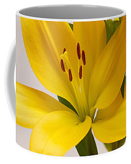 Lily Coffee Mug by Scott Carruthers