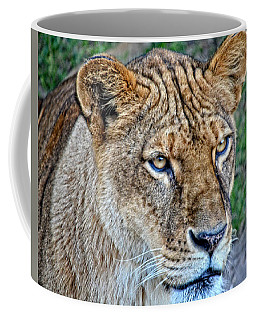 Lioness Deep In Thought Hdr Coffee Mug