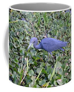 Little Blue Heron La Chua Trail Coffee Mug