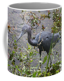 Coffee Mug featuring the photograph Little Blue Heron - Waiting For Prey by Christiane Schulze Art And Photography