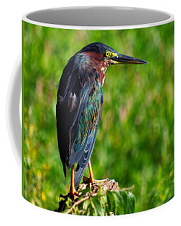 Little Green Heron 002  Coffee Mug