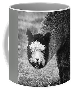 Coffee Mug featuring the photograph Llama by Yulia Kazansky