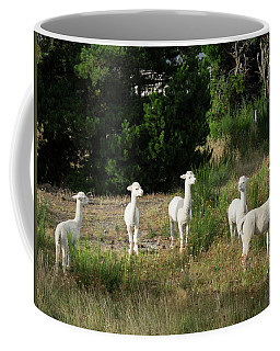 Llamas Standing In A Forest Coffee Mug