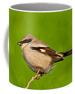 Loggerhead Shrike Coffee Mug