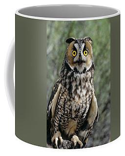 Long Eared Owl Asio Otis Europe, Asia Coffee Mug