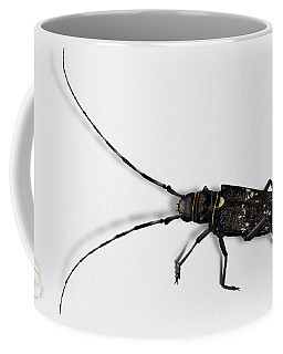 Long-hornded Wood Boring Beetle Monochamus Sartor - Coleoptere Monochame Tailleur - Coffee Mug