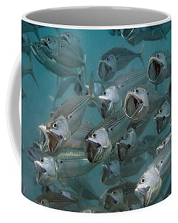 Coffee Mug featuring the photograph Long-jawed Mackerel Foraging Red Sea by Dray van Beeck