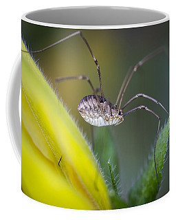 Long Sexy Legs Coffee Mug
