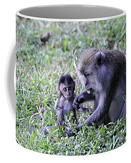 Coffee Mug featuring the photograph Long Tailed Macaque Family by Shoal Hollingsworth