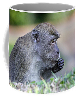 Coffee Mug featuring the photograph Long Tailed Macaque Feeding by Shoal Hollingsworth