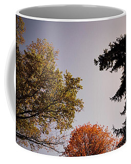 Coffee Mug featuring the photograph Looking Down On Us by Photographic Arts And Design Studio