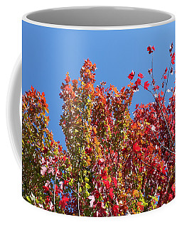 Coffee Mug featuring the photograph Looking Upward by Debbie Hart