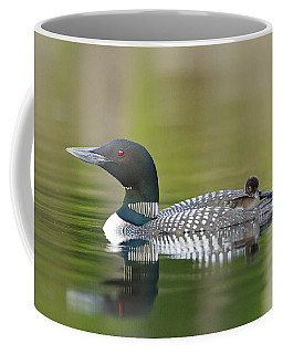 Loon Chick With Parent - Quiet Time Coffee Mug